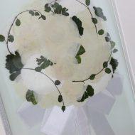 白い薔薇押し花
