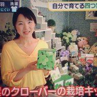 四つ葉クローバー栽培キット|テレビ由花さん