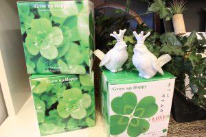 四つ葉のクローバー栽培キット販売しています|メディア取材されました|四つ葉クローバー栽培キット