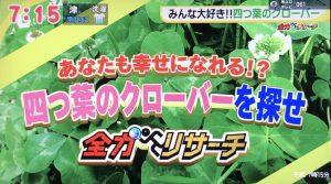 四つ葉のクローバー栽培キット|ドデスカで紹介されました 見出し