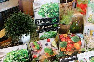 パクチー栽培キットおうちデリでオシャレに栽培|色々な種類の栽培キッド